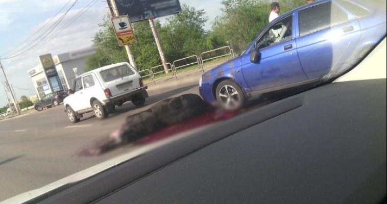 Жуткое ДТП. На дороге погибла лошадь