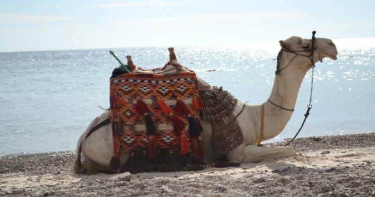 Меньше всего южноуральцы тратят на спорт, культуру и туризм