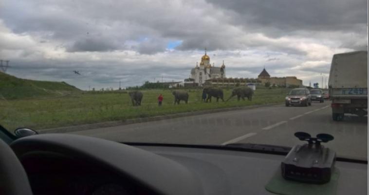В мэрии рассказали, кто из звёзд поздравит магнитогорцев в День металлургов и будут ли слоны участвовать в празднике