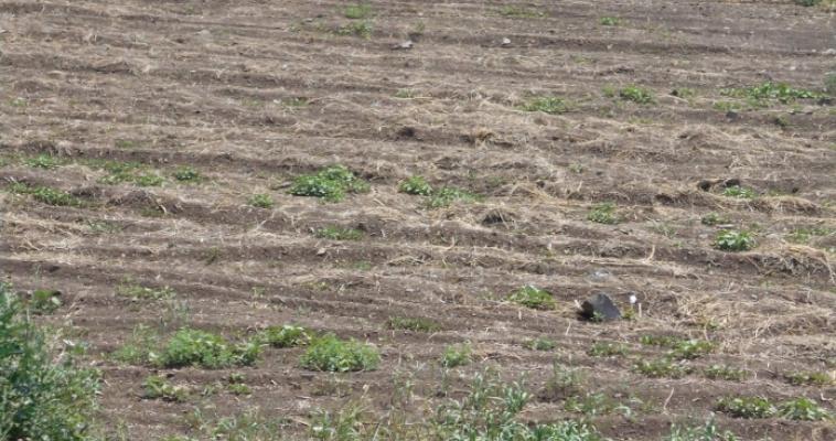 В Орджоникидзевском районе уничтожили более 10 тысяч кв. м. конопли
