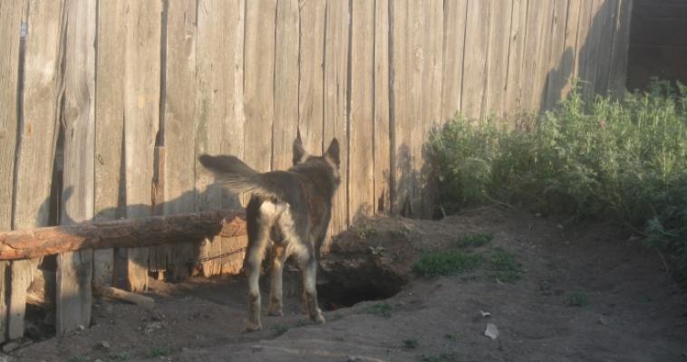 Собака насмерть загрызла полуторагодовалую девочку. Возбуждено уголовное дело