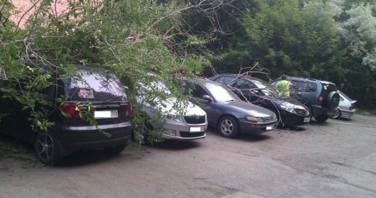 Кто виноват? Дерево рухнуло сразу на 4 автомобиля