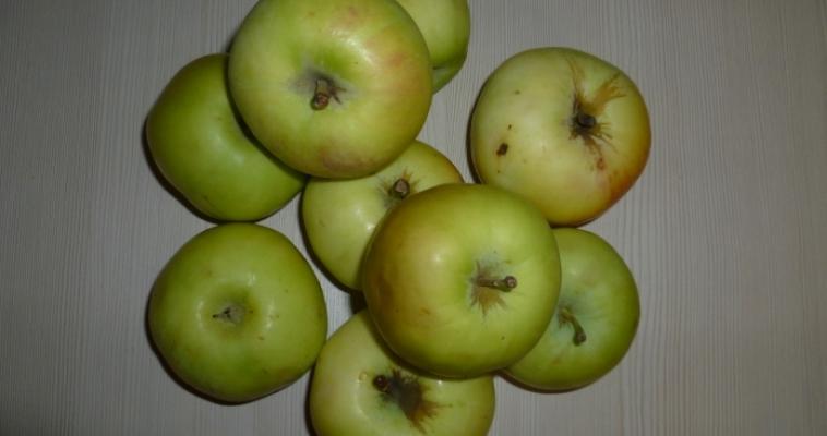 Из яблока – ухо. Ученые выращивают человеческие органы из растений