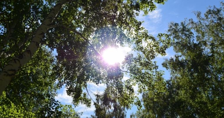 В среду ожидается до плюс 33°C