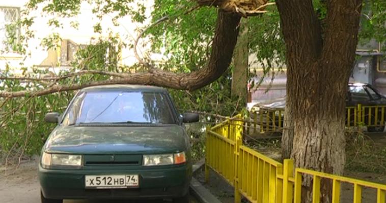 Не прошло и недели. Дерево, рухнувшее на машины во время грозы, наконец-то убрали!
