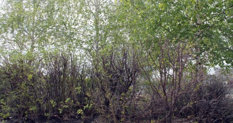 «Праздник» для 65 тысяч охотников Южного Урала всё-таки состоится