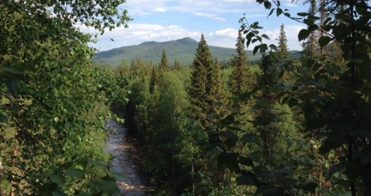 На Южном Урале обнаружены новые виды животных