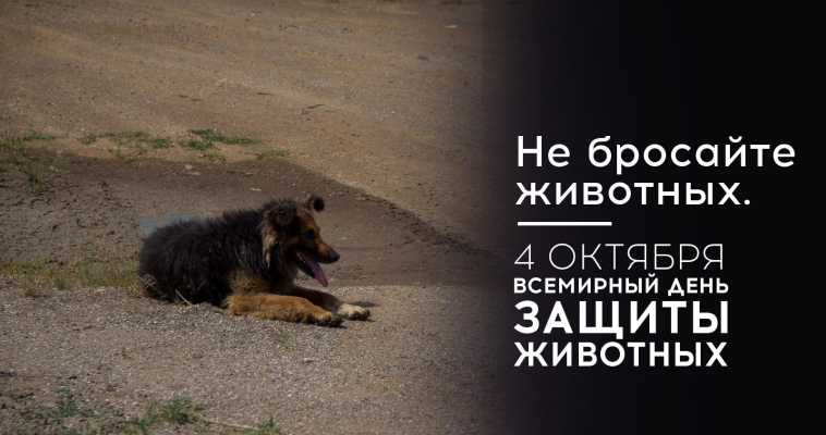 Прими участие в акции и помоги бездомным животным