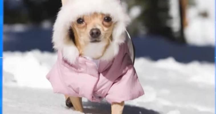 Морозостойкие собаки (06.11)