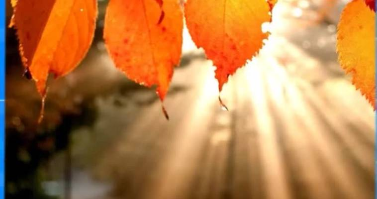 Осеннее настроение (24.11)