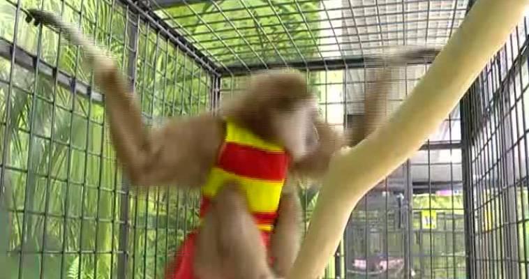 Выставка обезьян (25.03)