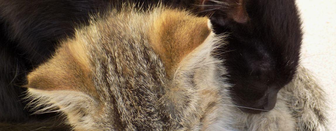 Советы: как помочь бездомным животным