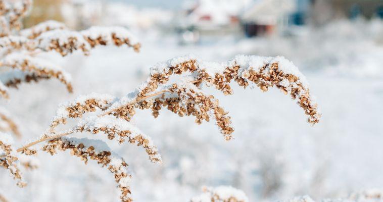 Готовим валенки!  В ночь на 14 ноября ожидаются сильные заморозки
