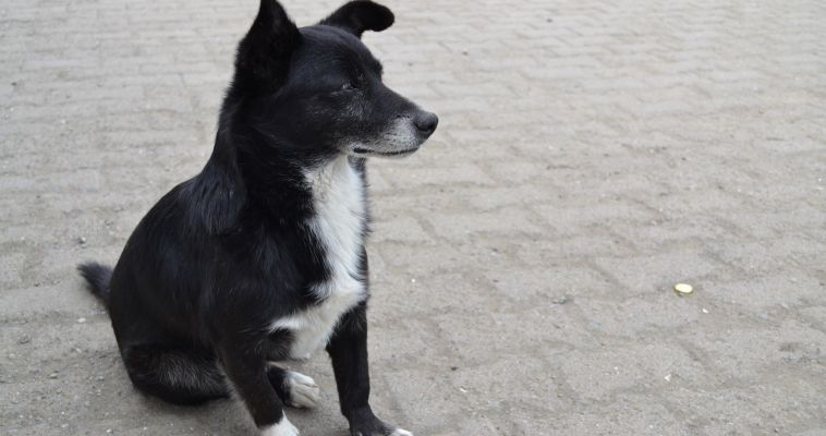 Опасайтесь бешенства! Ветеринарная служба области предупреждает об опасности