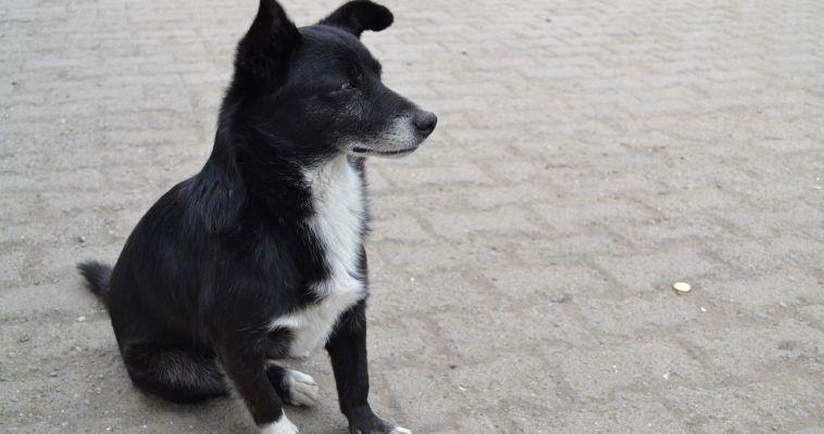 Горожан призывают впускать бездомных животных в теплые помещения