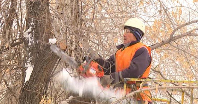 Сухие ветки и стволы под пилу. Сколько в Магнитке аварийных деревьев?