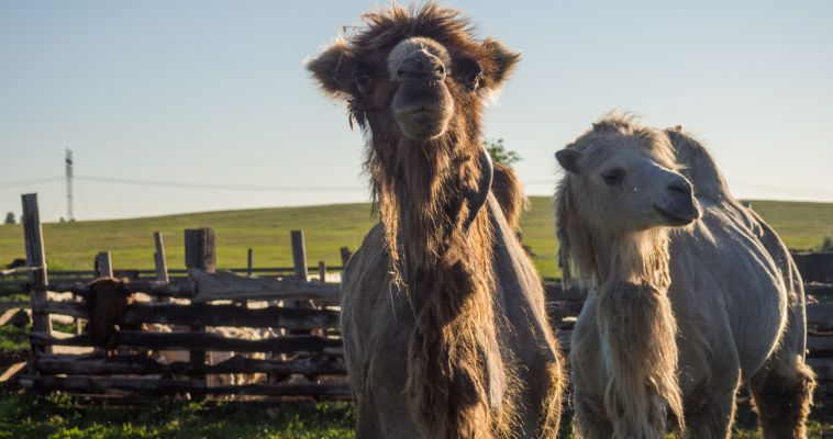 Южноуральским туристам предлагают съездить в Казахстан