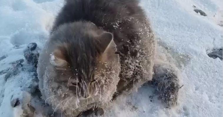 ВИДЕО: Кот вмерз в лед