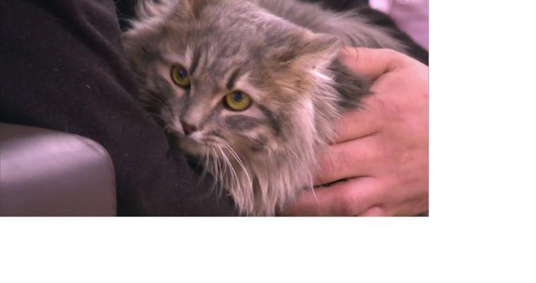 Спасённый из ледяного плена, южноуральский кот покорил Москву
