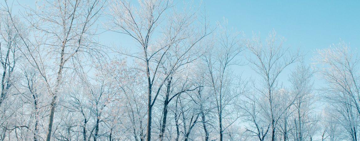 Морозы не отступят. Прогноз погоды