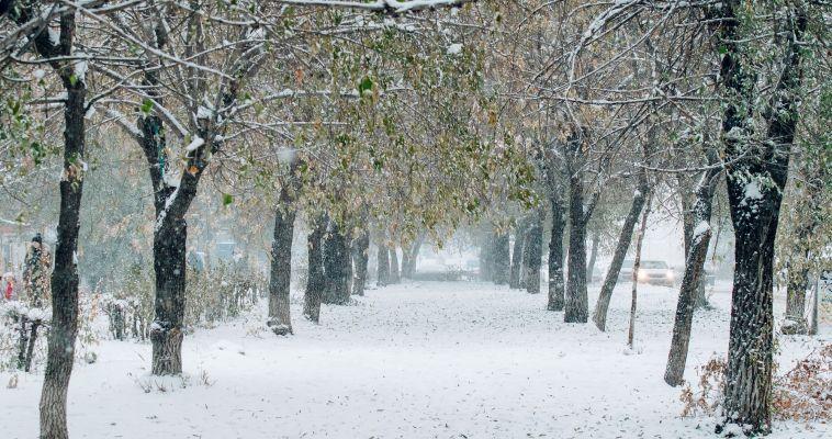 Какая погода ожидает нас в первый день нового года?