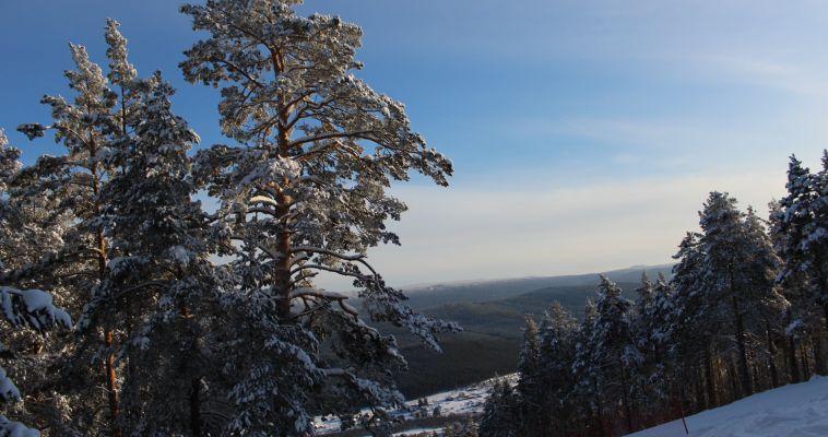 «Черные лесорубы» нанесли серьезный ущерб лесам Южного Урала