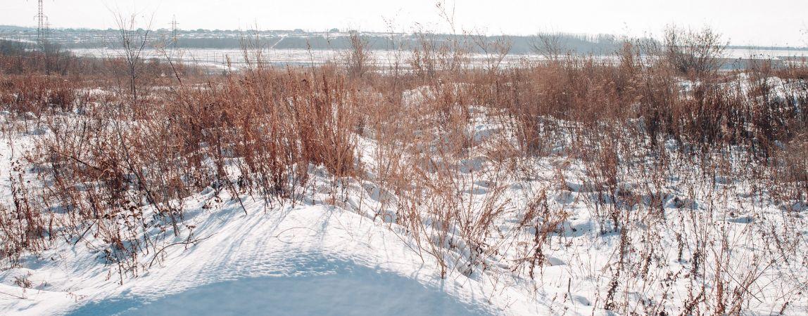 Увидеть нерпу и самое глубокое озеро. Открылся сайт Года экологии в России