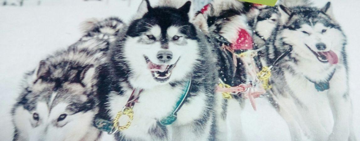 Гонки, танцы с собаками и аттракционы. Горожан приглашают на «Стальной рубеж»