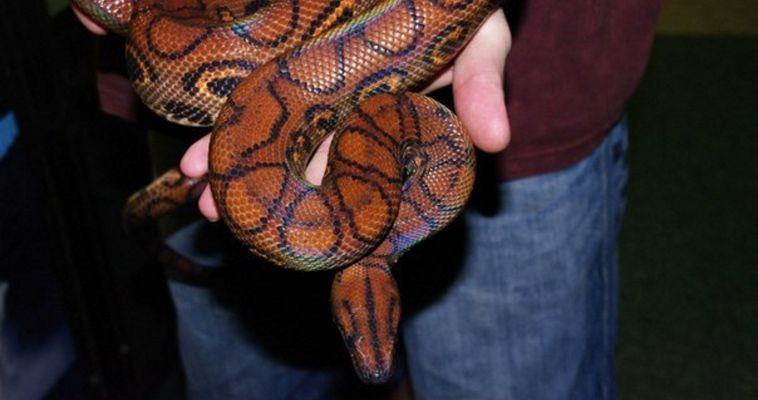 Подержать змею и покататься на черепахе. В Магнитогорске работает Костромской контактный зоопарк