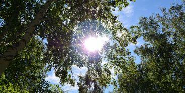 Мы выиграли 9000 деревьев! Магнитогорск в числе победителей акции «Аллея Славы»