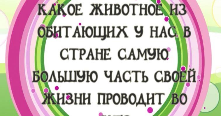 ВНИМАНИЕ, ВОПРОС! (13.06)