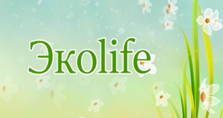 ЭКОLIFE (26.06)