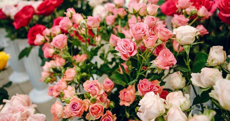 Пять детей, похожих на цветы