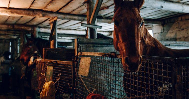 В Агаповке конокрады угнали табун лошадей