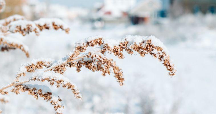 Снежное начало последней недели уходящего года. Прогноз погоды на понедельник