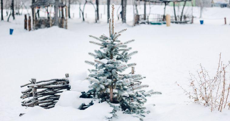 Магнитогорск отметит Всемирный день снега