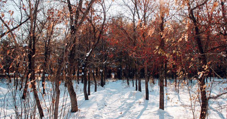 Челябинцы предлагают благоустроить магнитогорский парк Ветеранов