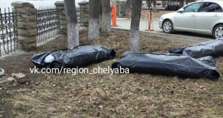 Мешки для транспортировки трупов разбавили весенний пейзаж