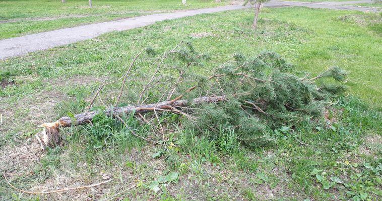 Неизвестные погубили дерево в парке Трёх поколений