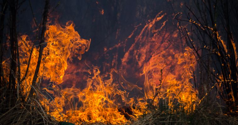 Утром сгорел садовый домик