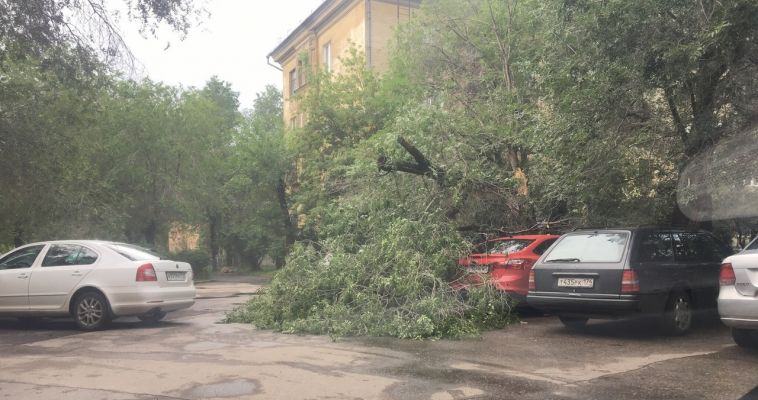 Водители, не прячьтесь в тени! На машины падают деревья