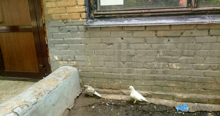 Из детского клуба выселили голубей и сов