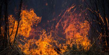 Эксперты назвали причину пожара в Агаповском районе
