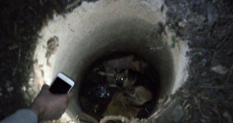 Магнитогорцы вызволили собаку из открытого канализационного люка