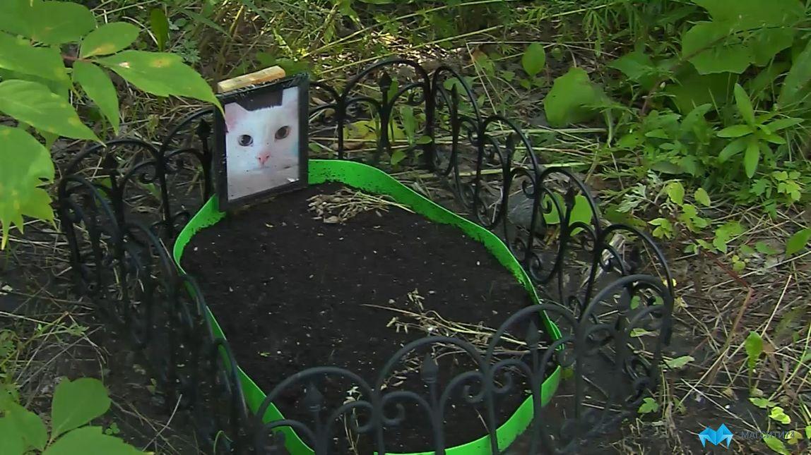 Любитель домашних животных обустроил могилу для кота в центре города