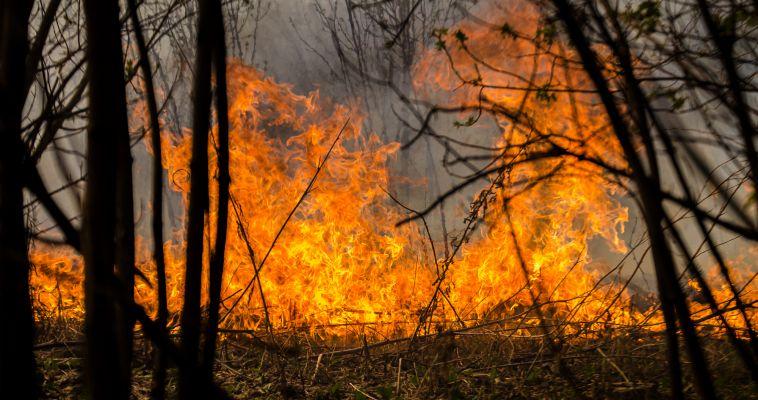 Недалеко от Магнитогорска горит лес