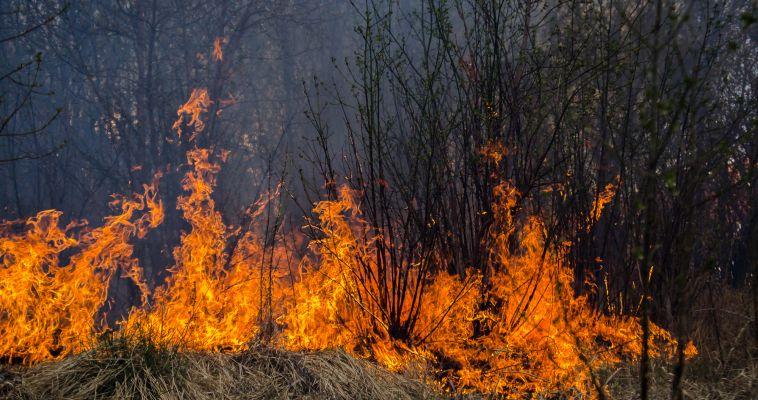 Магнитогорские огнеборцы всю ночь тушили лесной пожар