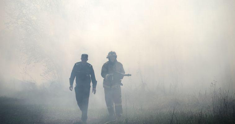 Южноуральским лесам грозит опасность