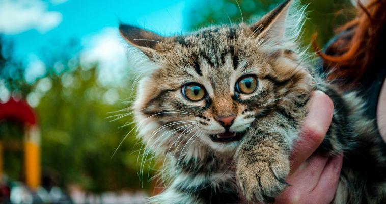Юных магнитогорцев приглашают сделать своего «книжного» кота
