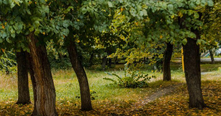 В Магнитогорске клещи сдают свои позиции